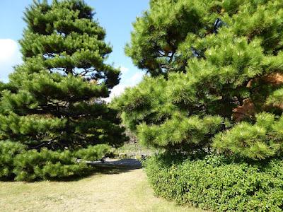 【京都府】京都府立植物園ウォーキング