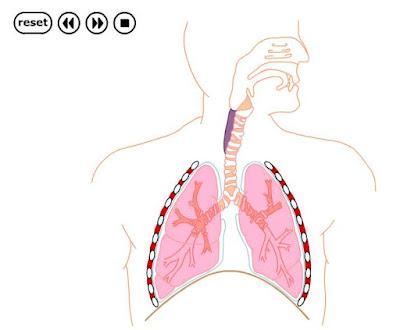 http://www.bioygeo.info