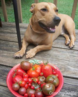 Tuna Fish Joe with heirloom tomatoes