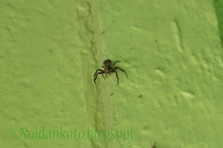 Hämähäkki Unessa