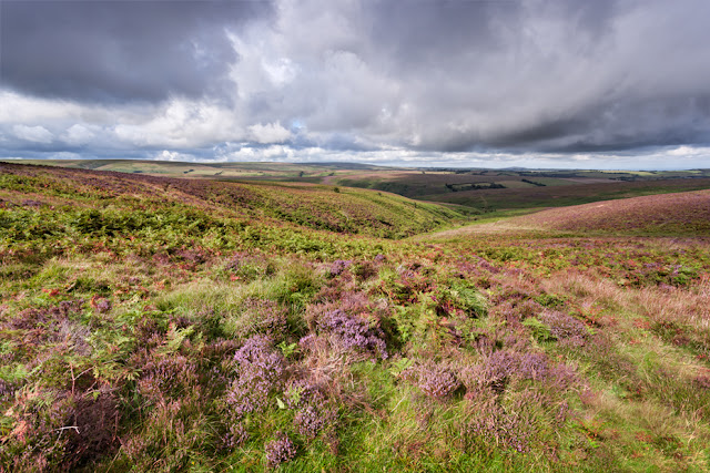 Exmoor landscape with purple heather by Martyn Ferry Photography