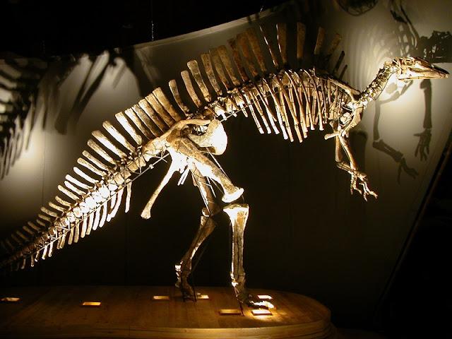 Esqueleto ósseo de dinossauro exibido no Museu de História Natural de Veneza