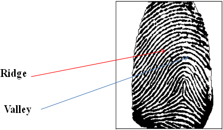 What Is Fingerprint Scanner, How Does It Works and Their