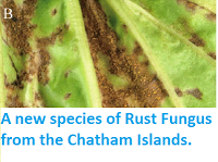 http://sciencythoughts.blogspot.co.uk/2014/08/a-new-species-of-rust-fungus-from.html
