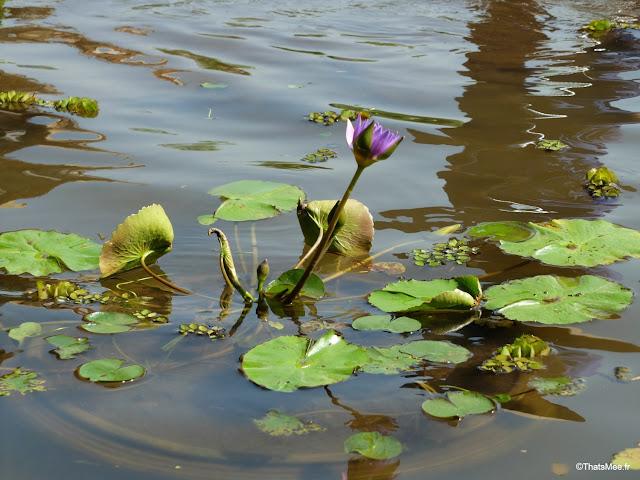 hotel emeralda reserve van long van gien vietnam fleur lotus