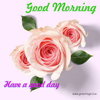Beautiful fresh morning flowers have a good day
