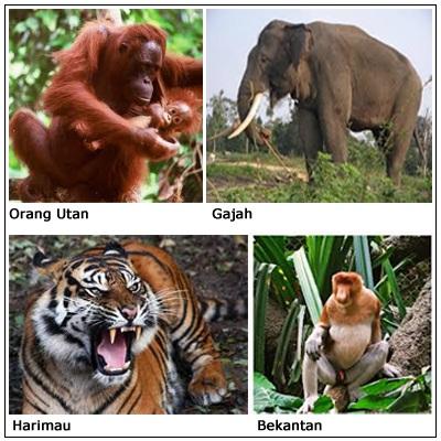 1010+ Gambar Fauna Asiatis Peralihan Australis HD Terbaik