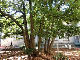 横浜開港資料館たまくすの木