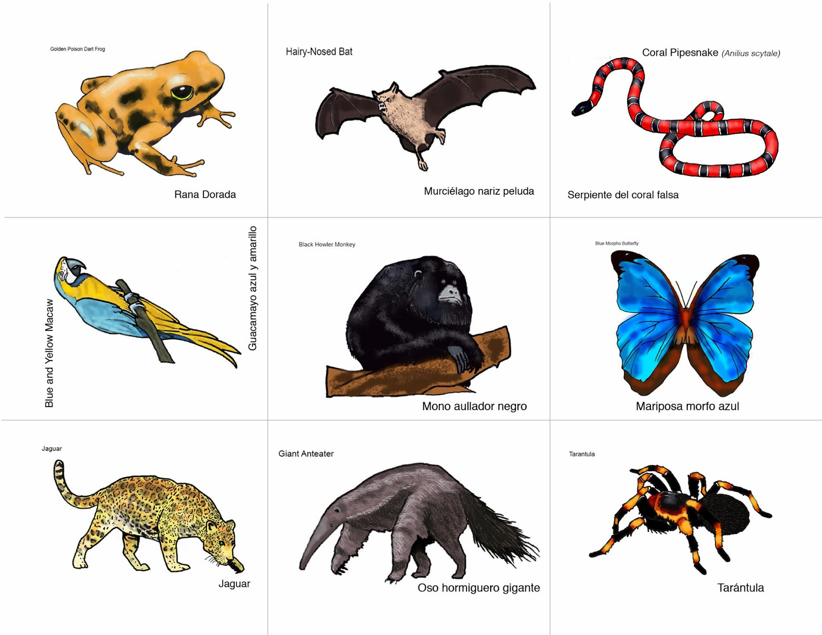 Rainforest Animals List For Kids