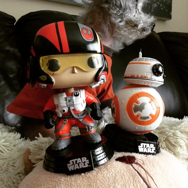 A large-headed Funko Pop of Poe Dameron sits beside a Funko Pop of B B 8. A fuzzy grey poodle, Murchie, looms out of focus behind them.