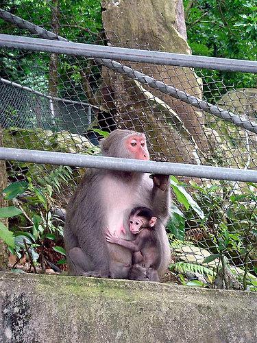 烏山彌猴保護區|台南南化動物樂園景點|烏山臺灣獼猴區