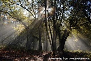 Melestarikan Hutan, Merawat Peradaban