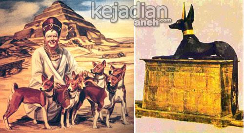 sejarah anjing basenji