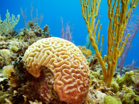Natural resources (economically referred to as lan: Coral ... - photo#46
