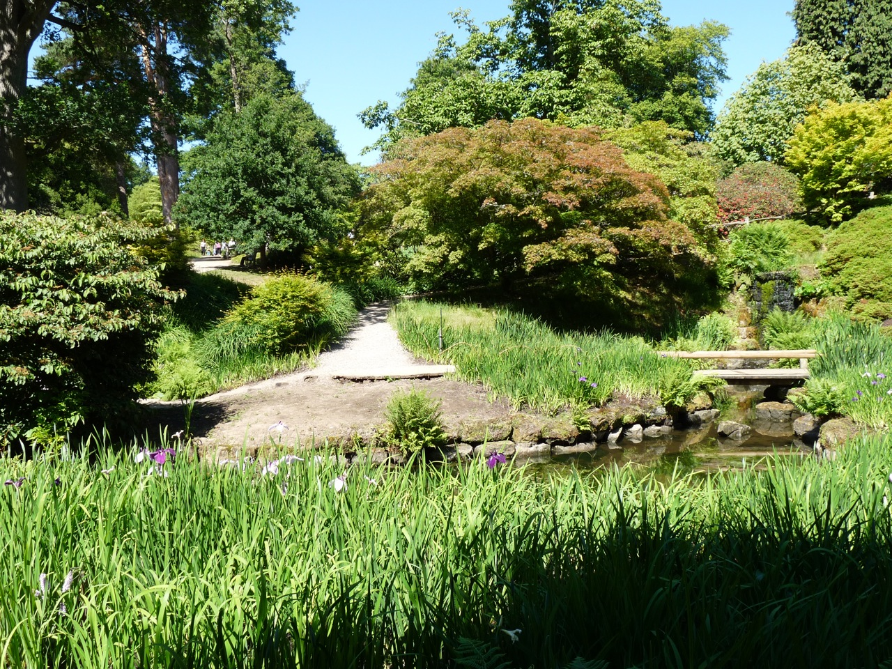 Wakehurst Place - the Iris garden