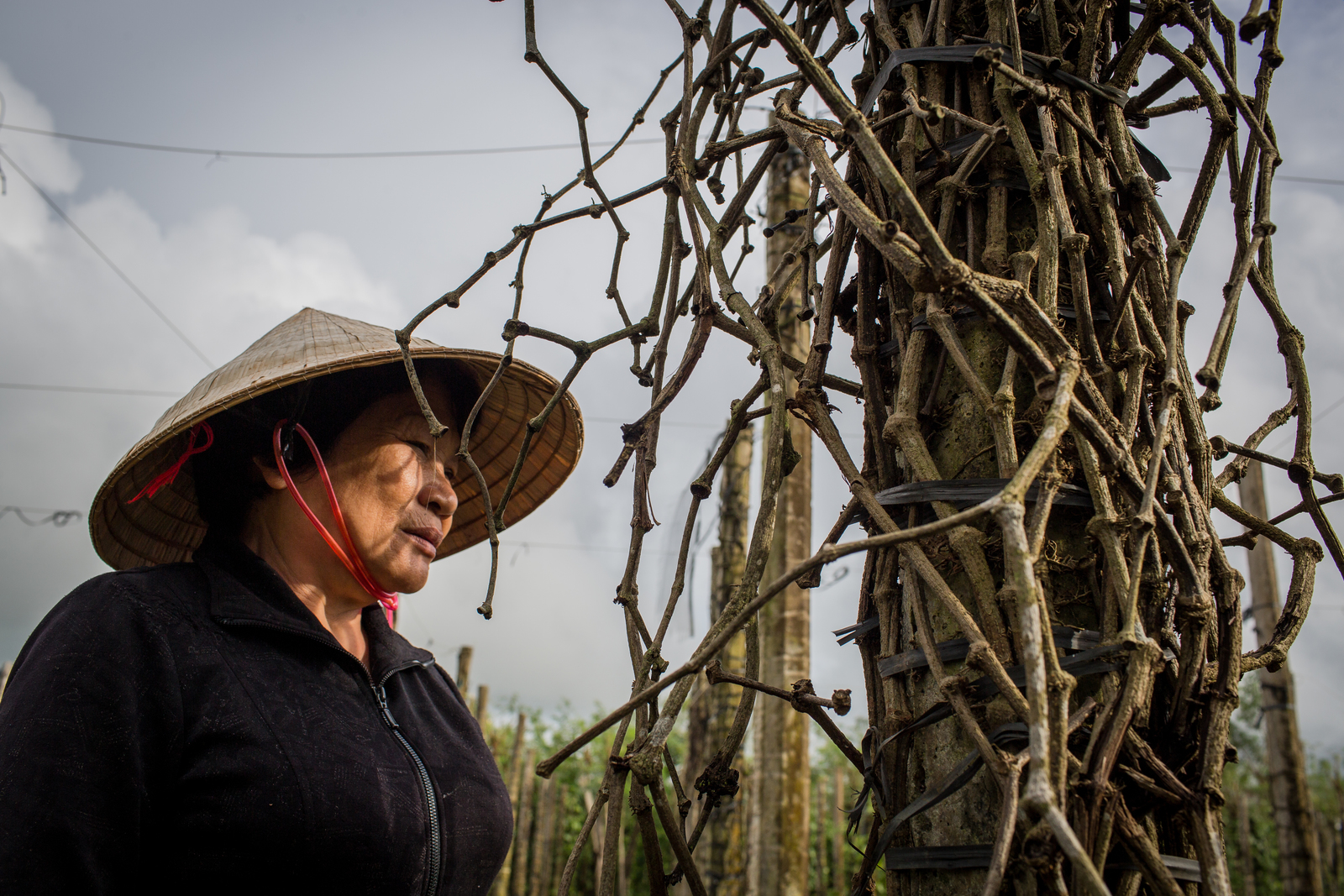 Thủ phủ hồ tiêu thất thủ, nhiều nông dân rời Gia Lai đi làm ăn xa để... trốn nợ