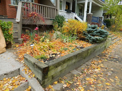 Monarch Park Toronto Fall Cleanup Front Yard Before by Paul Jung Gardening Services--a Toronto Organic Gardening Company