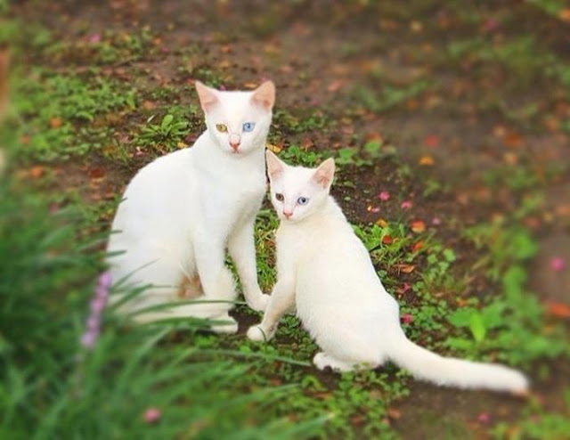Gia tộc nhà mèo và những bản sao mini siêu dễ thương