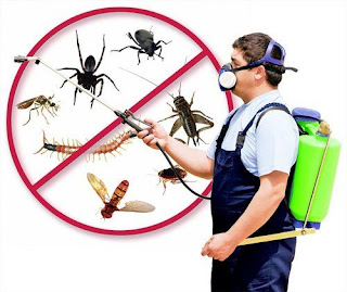 Company-kill-insects-at-home-1