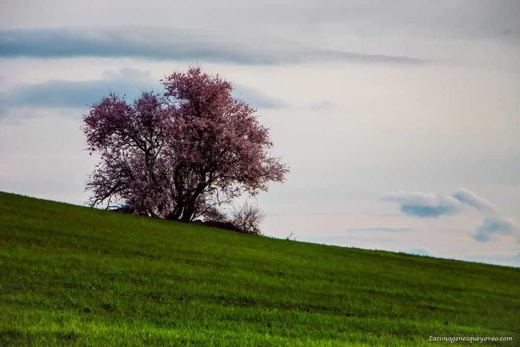 La espectacular floración de los árboles con flores rosa