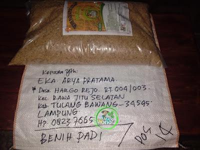 EKA ARYA Tulang Bawang, Lampung   (Sebelum Packing)