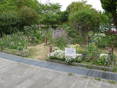 深北緑地公園 あすなろ花壇