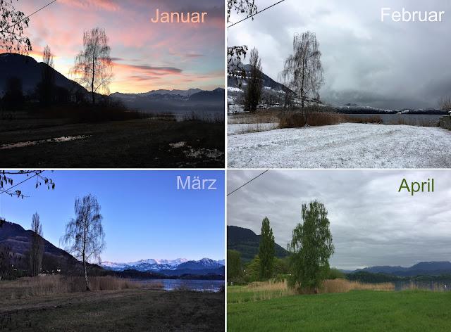 4 Fotos vom gleichen Standpunkt aus ins Ried, jeweils Ende Januar, Februar, März und April