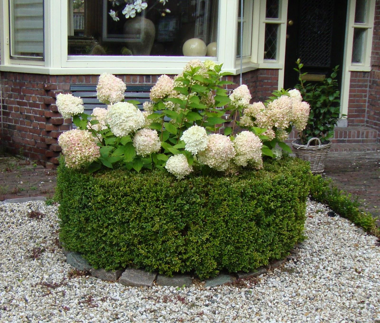 Foto diario di una giardiniera curiosa piccoli giardini for Giardini piccoli