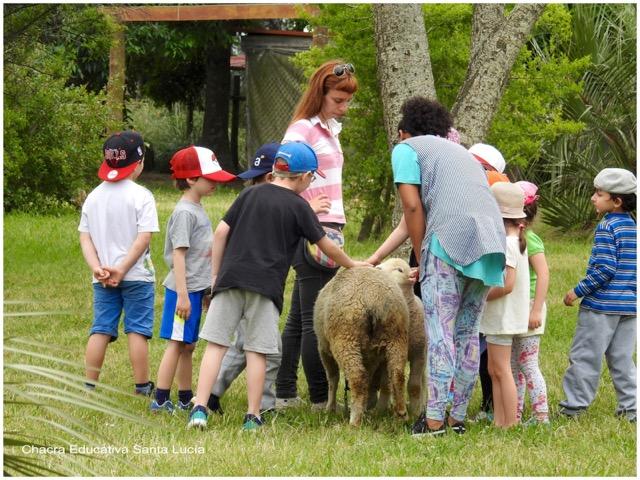 Docentes y alumnos estudian a una oveja y su cordero - Chacra Educativa Santa Lucía