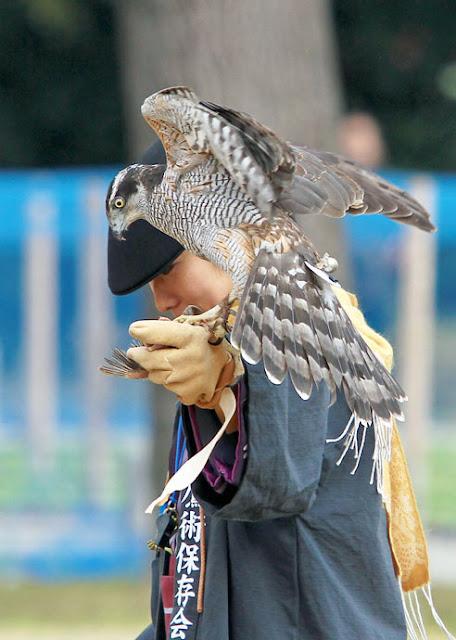 Takagari (Demonstration of Falconry) at Hamarikyu park, Tokyo
