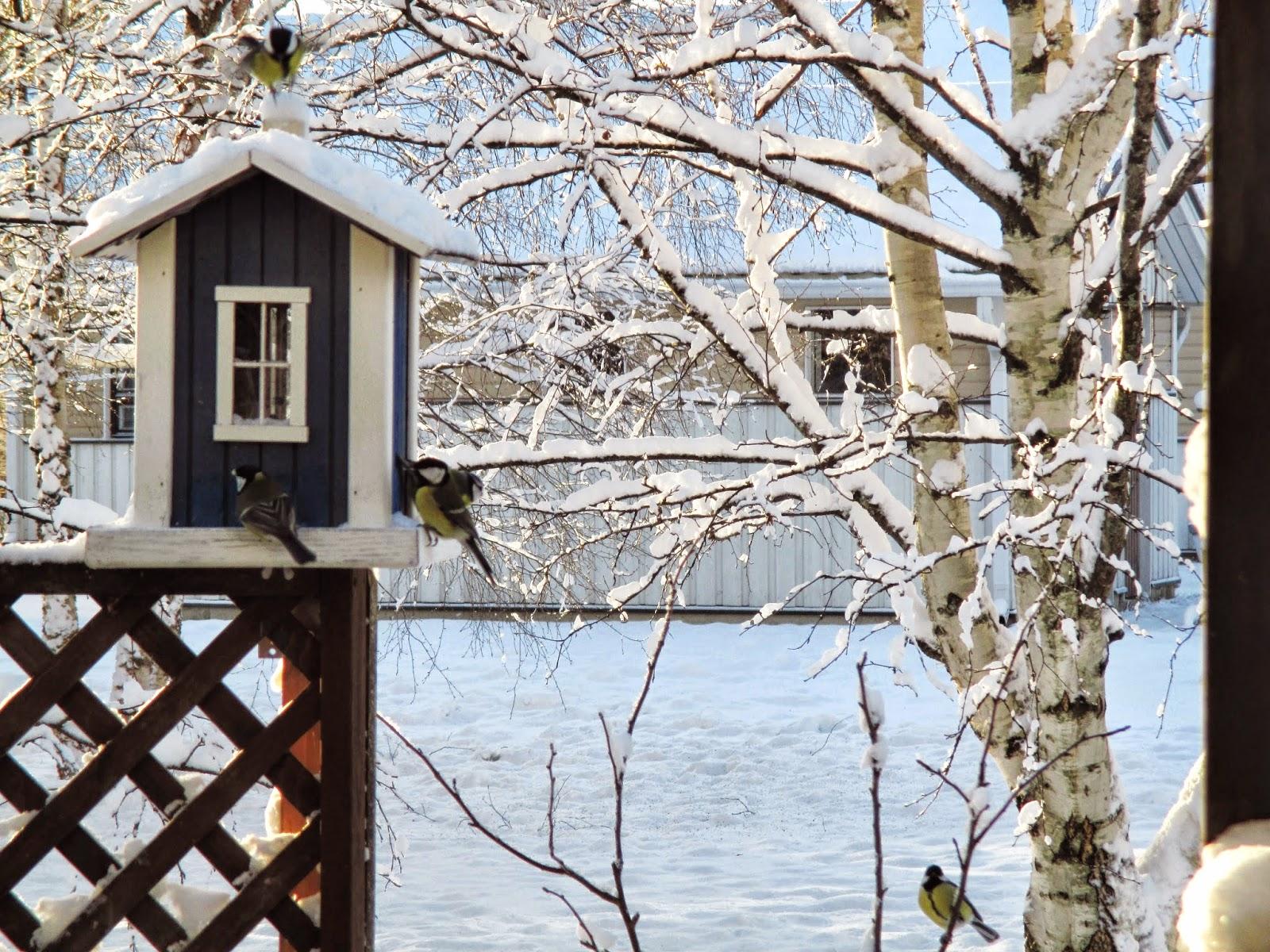 talitintit, talvi, lintulauta