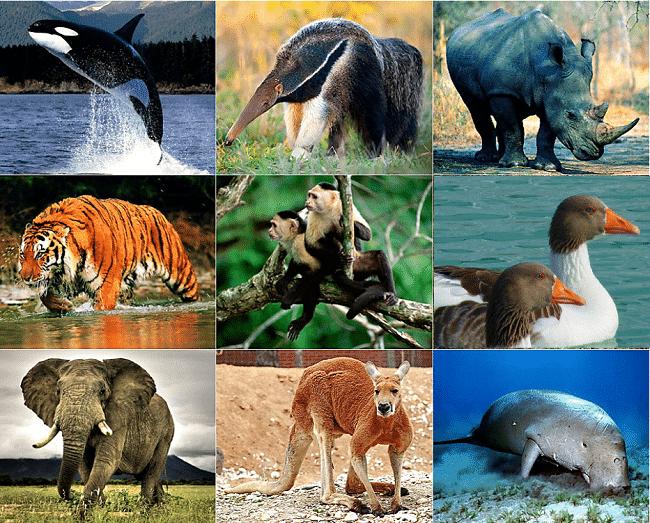 animales-vertebrados-2