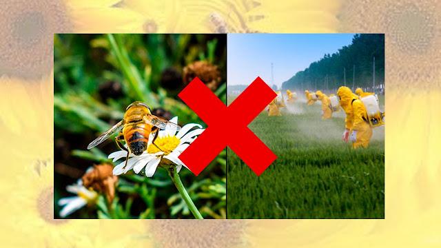 greenpeace salvar abejas