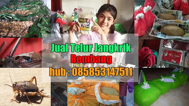 Jual Telur Jangkrik Rembang Hubungi 085853147511