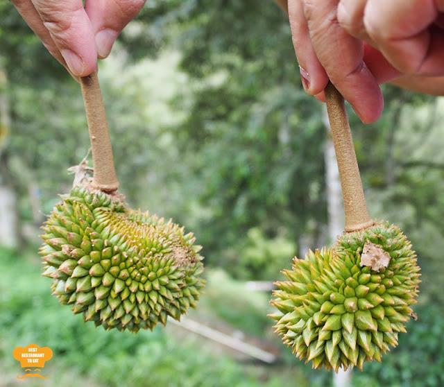 Grade B Durian at Durian Wonderland