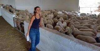 Από την Αθήνα στο Αιτωλικό η 31χρονη Μαριάννα - Εκτρέφει πρόβατα