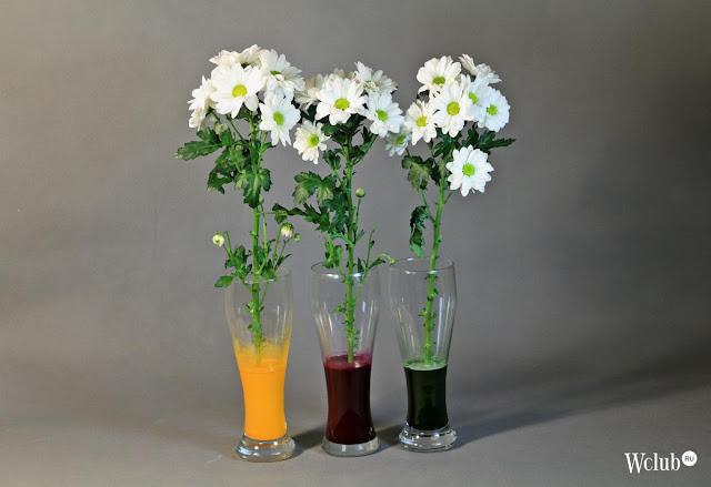 цветы, цветы живые, природные материалы, окрашивание, окрашивание цветов, окрашивание живых цветов, цветы для букета, цветы в подарок, оформление цветов, цветы на 8 марта, цветы на День Влюбленных, цветы необычные, изменение цвета, красители,подарок на день святого Валентина, подарки на день всех влюбленных своими руками, подарок к дню святого Валентина своими руками, день всех влюбленных подарки, подарок на день святого Валентина парню своими руками, что подарить на день влюбленных мужу, подарки на 14 февраля, подарки на день святого Валентина, любовные подарки, подарки для влюбленных, подарок на день святого Валентина девушке своими руками подарок на день святого Валентина мужу своими руками подарок на день святого Валентина жене своими руками подарок на день святого Валентина мужчине своими руками подарок на день святого Валентина женщине своими руками подарок на день святого Валентина любимой своими руками подарок на день святого Валентина любимому своими руками Романтические подарки на день влюбленных, Полезные подарки на день влюбленных, ОригинальныеС учетом хобби любимого С учетом хобби любимого подарки на день влюбленных, подарки на 14 февраля для любимого сделать своими руками, подарки на 14 февраля для любимой сделать своими руками, подарок парню на 14 февраля идеи своими руками как сделать подарок на день святого Валентина своими руками подарки на день всех влюбленных своими руками подарки на 14 февраля своими руками оригинальные подарки на 14 февраля, интерьерный декор на 14 февраля, идеи для украшения дома на 14 февраля, идеи для украшения дома на День Влюбленных, St. Valentine's Day, День Святого Валентина идеи для оформления дома на день влюбленных, интерьерный декор на день смятого Валентина, валентинов день, День любви, День влюбленных, http://handmade.parafraz.space/