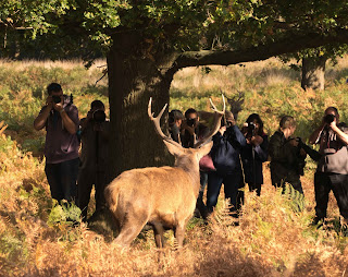 Photographers with a Stag in Front and Behind