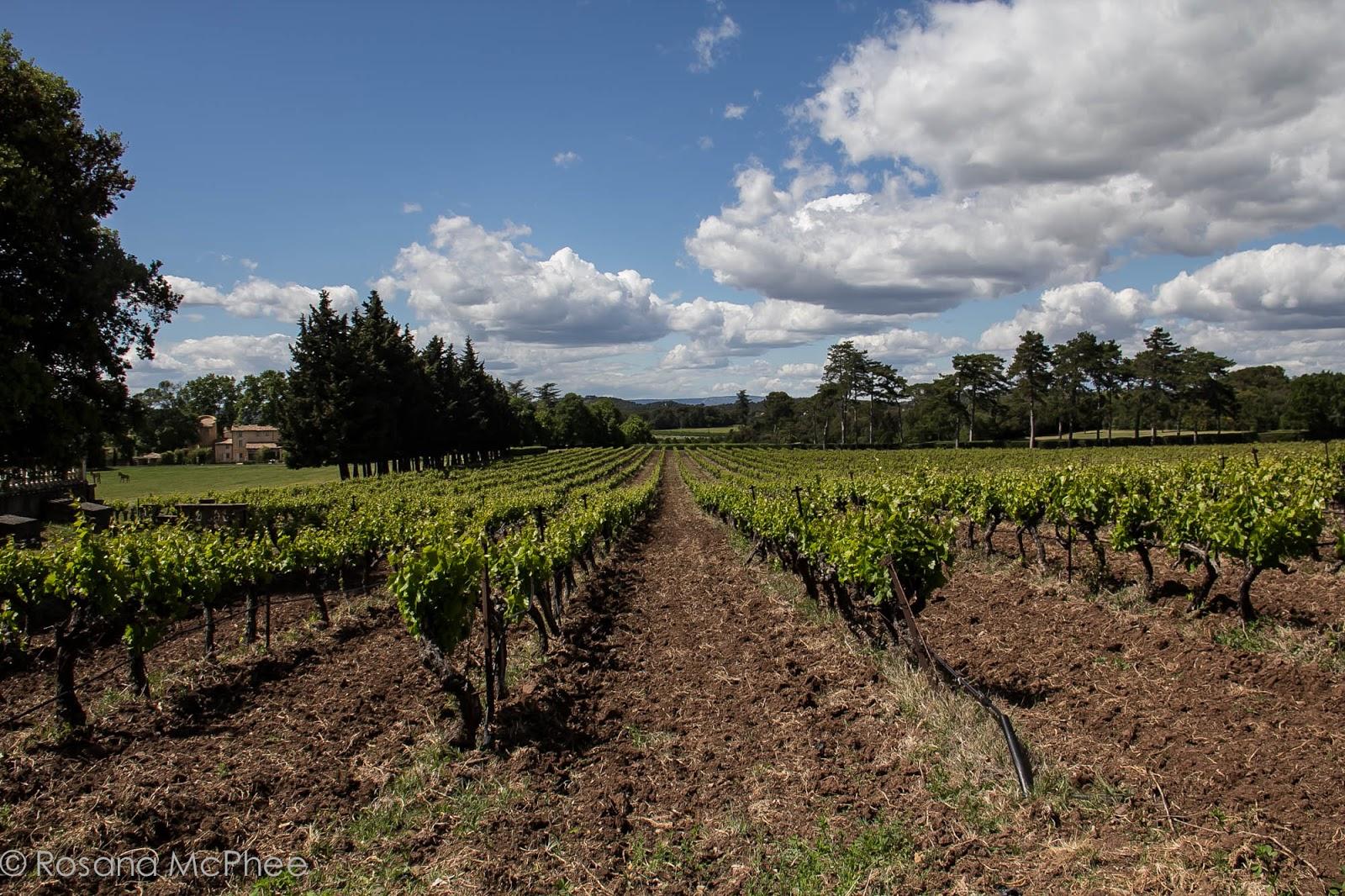 Marvelous Villa Baulieu, Provence Vineyard ...