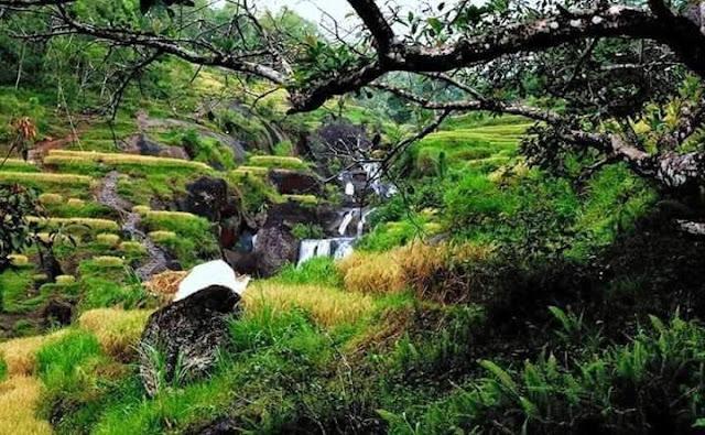 Kedung Kandang Waterfall Splitting in Rice Field near Bendo Area