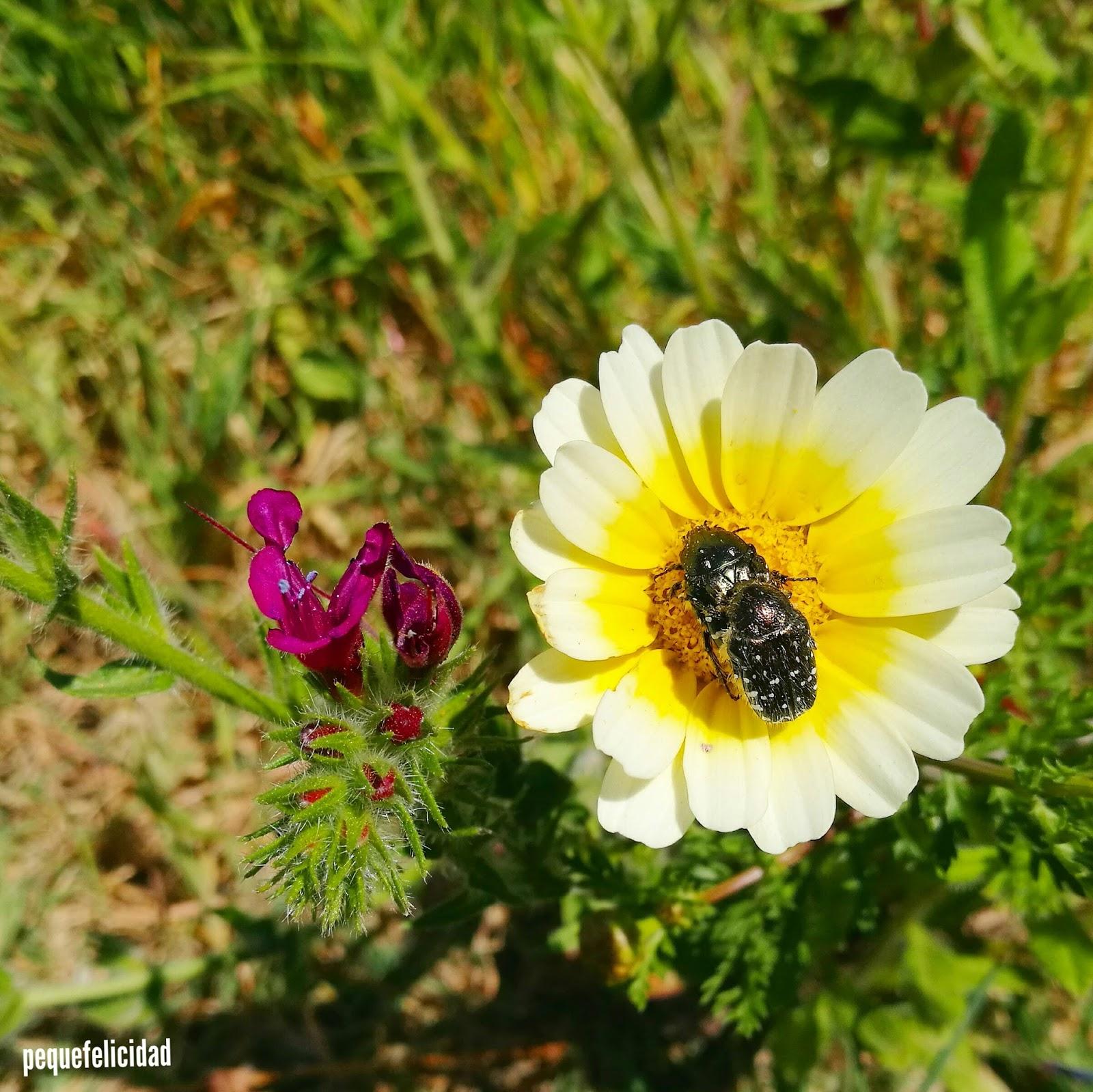 Pequefelicidad Flores 23 Actividades Y Materiales Montessori
