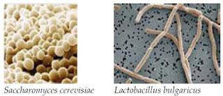 Peranan dan Pemanfaatan Mikroorganisme dalam Bioteknologi