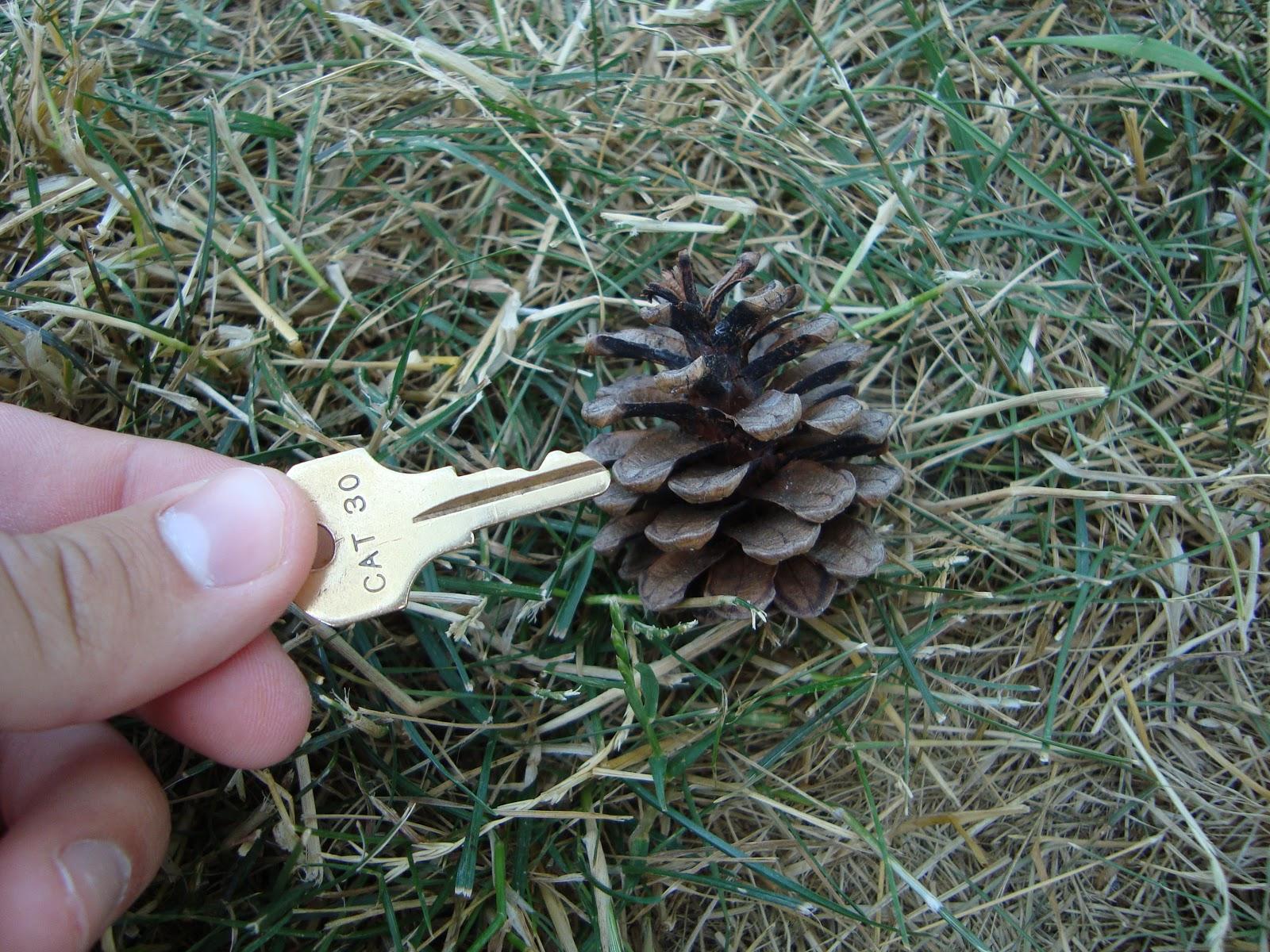 AP Bio Blog - 2012: Gymnosperm Cone