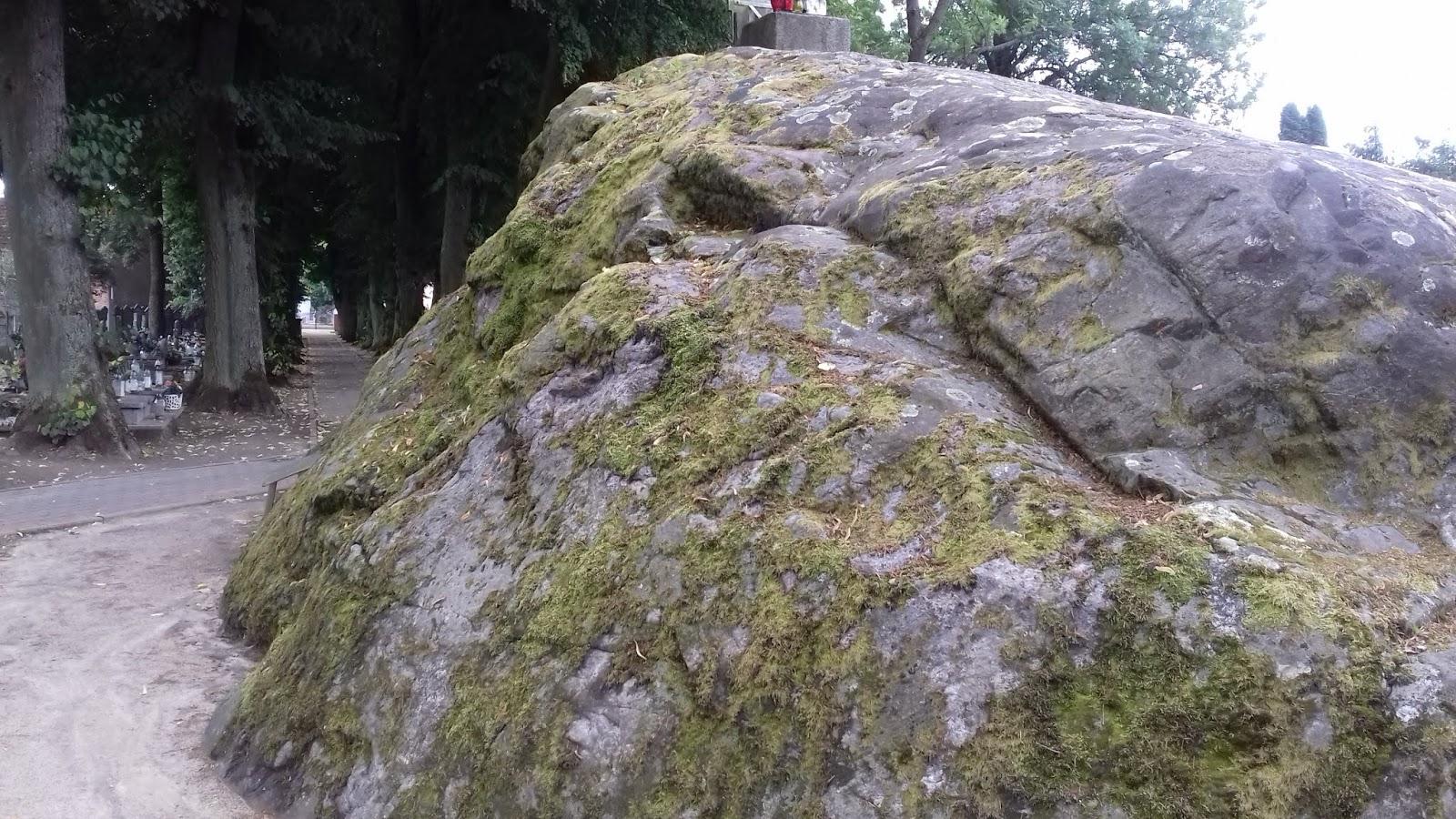 wot kojarzy drzewo