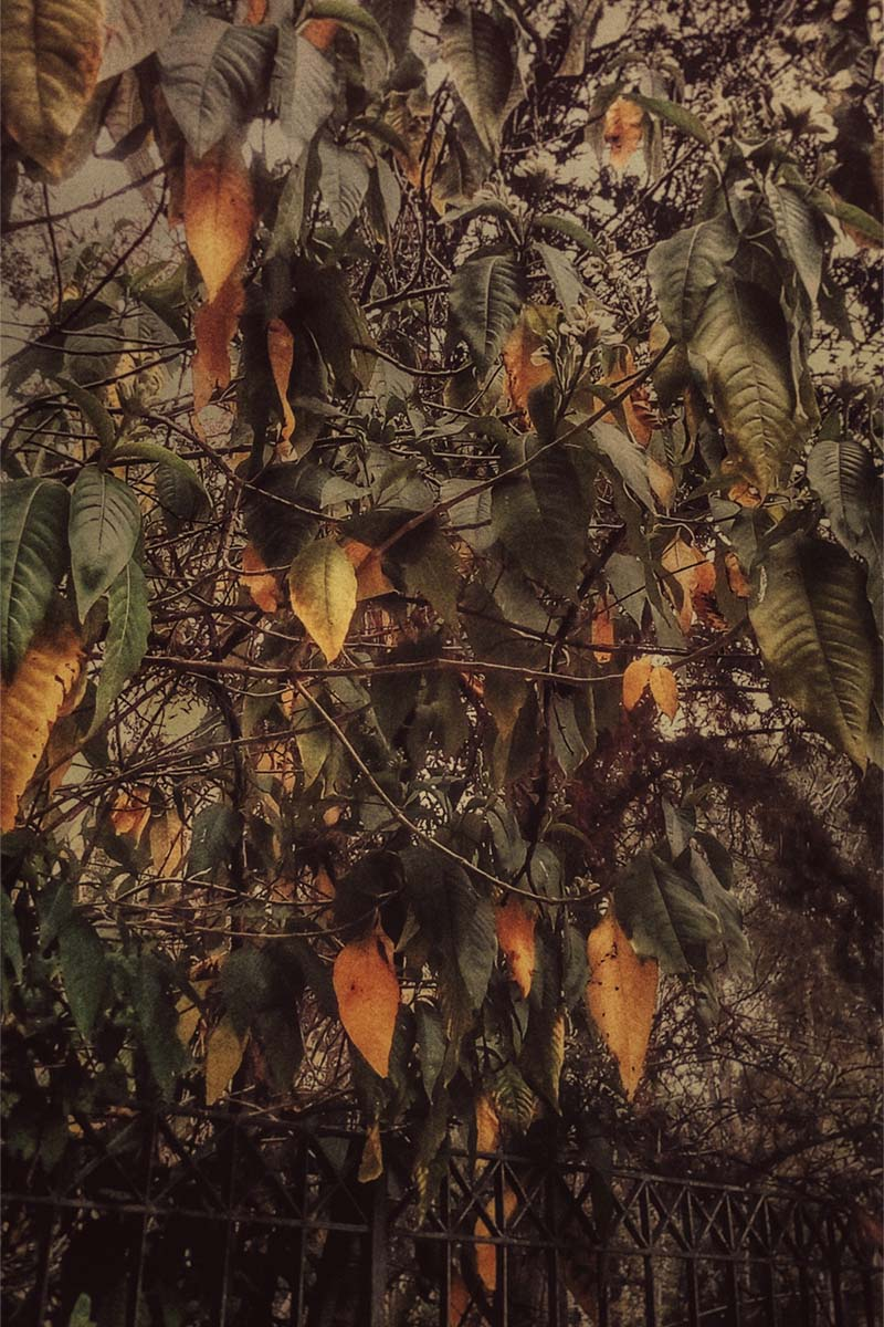 Foliage, photo of green and orange foliage on top of gray bars, by Kostas Gogas.