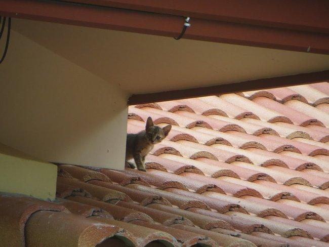 Котенок смотрит с крыши
