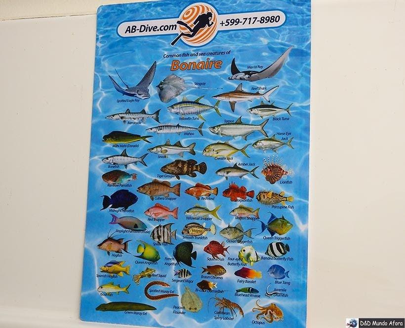 Peixes do mar de Bonaire - O que fazer em Bonaire, Caribe