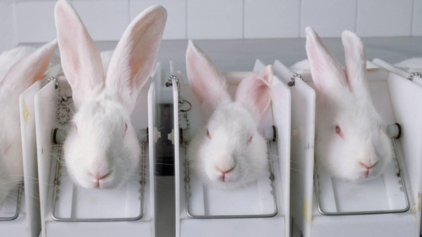 cruelty free vegan cosmetics