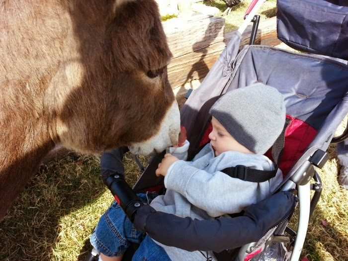 Wild Wilderness Drive Through Safari Zoo in Gentry, AR