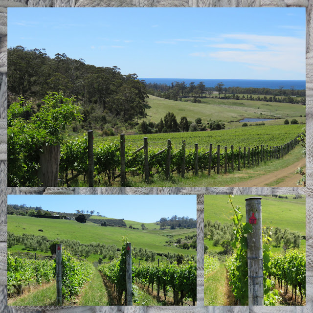 Vineyards in Tasmania